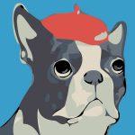 Bull Dog Blue